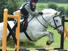 13. 3hh Gelding, Jumping Pony