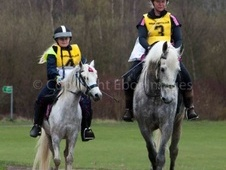 Pony Club Ponies horse - 9 yrs 11 mths 12.1 hh Dapple Grey - Sout...