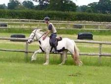 Betty Super Safe Cob Mare