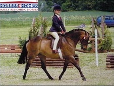 Doulton Little Gem, 12. 2h, Welsh Part Bred, 8 Years, Mare - Hert...