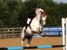 15. 1hh, rising 7 years, Appaloosa mare, true all rounder, very t...