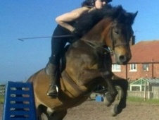 All Rounder horse - 12 yrs 13.3 hh Bay - Lancashire