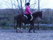 All Rounder horse - 5 yrs 12.2 hh Chestnut - Kent