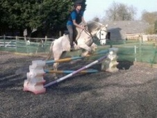 Pony Club Ponies horse - 12 yrs 13.1 hh Grey - Surrey