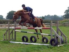 Stunning 16hh Chestnut Mare By Errigal Flight