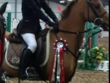 Jumping Pony With Unreal Talent