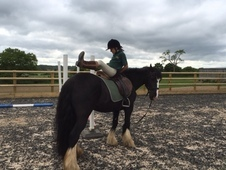 All Rounder - 14. 2 hh 7yr Black Mare