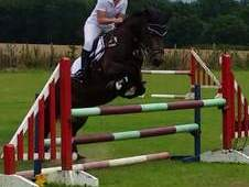 Brilliant fun 14. 2 mare for sale