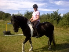 14'2 6 years old gorgeous cob for part loan - Berkshire