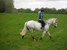 Riding Club Horses/Ponies horse - 12 yrs 16.0 hh Grey - Berkshire