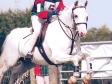 Pony Club Ponies horse - 9 yrs 12.2 hh Grey - East Sussex