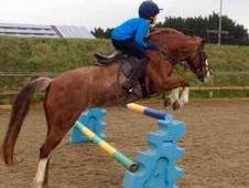 Talented 12. 2hh Show Jumper / Working Hunter Pony