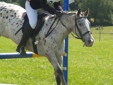 13.1hh Spotted Mare for Loan - Devon