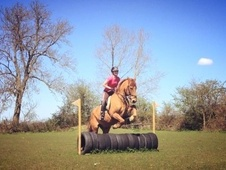 All Rounder horse - 15 yrs 1 mth 15.1 hh Chestnut - Essex