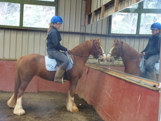 First Ridden Or Driving Pony