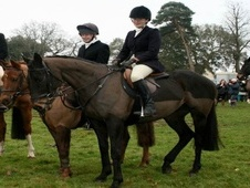 All Rounder horse - 10 yrs 15.3 hh Black - Devon