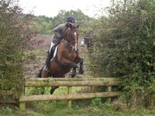 All Rounder horse - 10 yrs 17.0 hh Bay - West Midlands