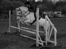 Pony Club Ponies horse - 10 yrs 3 mths 14.1 hh Appaloosa - Worces...