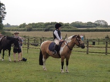 Pony Club Ponies horse - 14 yrs 12.1 hh Coloured - Northamptonshire