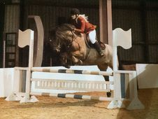 Amazing 14. 1 Strawberry Roan Super Pony Wins Everything Ideal Se...