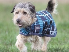 Shires Waterproof Dog Coats (All Sizes & Various Colours) - Leice...