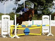 **sold**stunning 16hh Aes Reg'd Mare