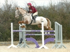 14.2hh JUMPING PONY FOR SALE