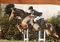 Sports Horses horse - 11 yrs 16.3 hh Bay - West Midlands