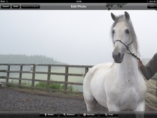 Reduced***pre Mare With Foal At Foot****