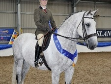 Hunters horse - 10 yrs 8 mths 17.1 hh Grey - Hertfordshire
