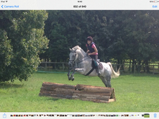 Lovely Grey Gelding