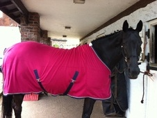 All Rounder horse - 12 yrs 6 mths 16.1 hh Black - Cheshire