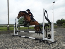 Showjumping School Mistress