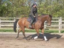 Dressage horse - 14 yrs 16.2 hh Bay - West Yorkshire