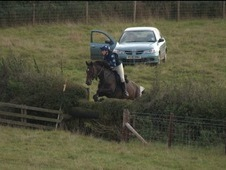 16. 1hh Attractive TB Mare, 7 years