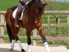 Dressage horse - 10 yrs 17.1 hh Bay - West Midlands