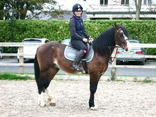 All Rounder Horse - 12 Yrs 15. 0 Hh Bay - West Yorkshire