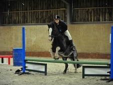 14:2hh Cob, Suit Novice Hacking Or Riding Club Home