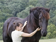 This Is A Six Year Old Dream Friesian, And Measures Just Under 17...