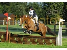 All Rounder horse - 8 yrs 16.3 hh Coloured - West Sussex