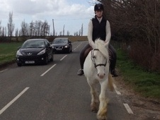 All Rounder horse - 5 yrs 14.2 hh Grey - Essex