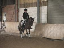 Beautiful Show Jumping Mare For Sale
