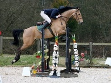 All Rounder horse - 7 yrs 16.0 hh Dun - East Sussex