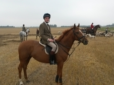 Quality Irish 16:1 Hands Chestnut Mare