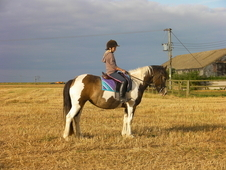 14hh Dun And White Mare