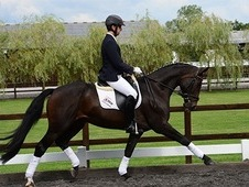 Small Dressage Horse