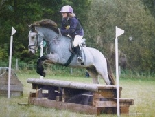 All Rounder horse - 12 yrs 13.0 hh Blue Dun - Suffolk