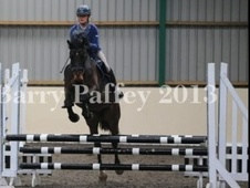Potential young sports horses horse - 6 yrs 16.1 hh Dark Bay - Essex