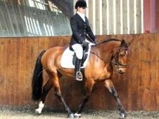 All Rounder horse - 4 yrs 15.1 hh Bay - West Sussex
