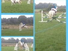 **reduced Top Ponyclub/showjumper**